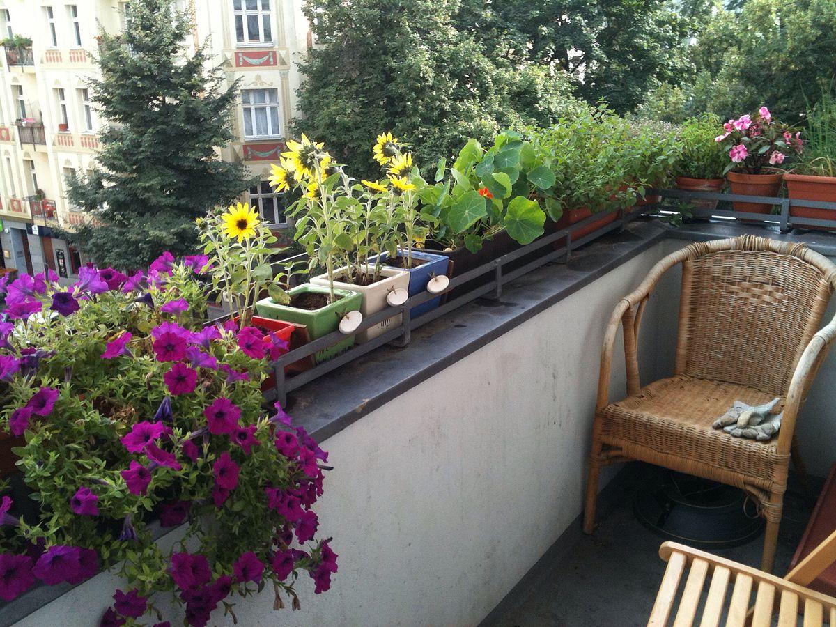 Planten Voor Balkon.Je Balkon Opfleuren Met Balkonplanten Sense Of The City