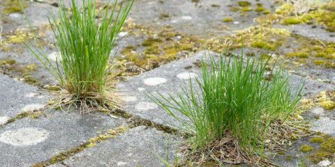 groene aanslag tuintegels
