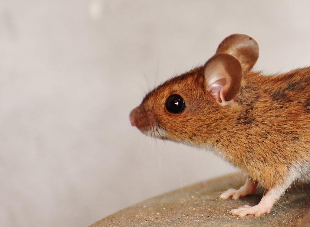 Muis In Slaapkamer : Vakantiehuis muis op terschelling