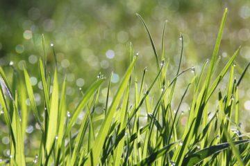 soorten gras